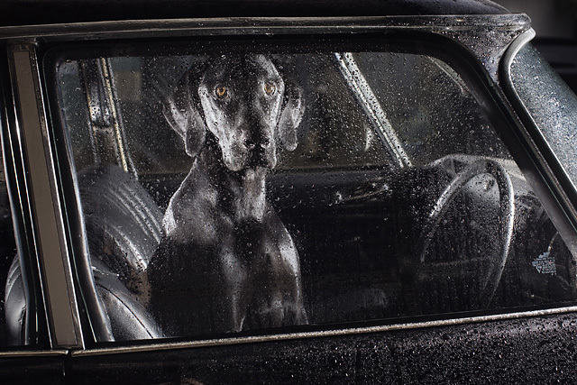 The silence of dogs in cars, Martin Usborne