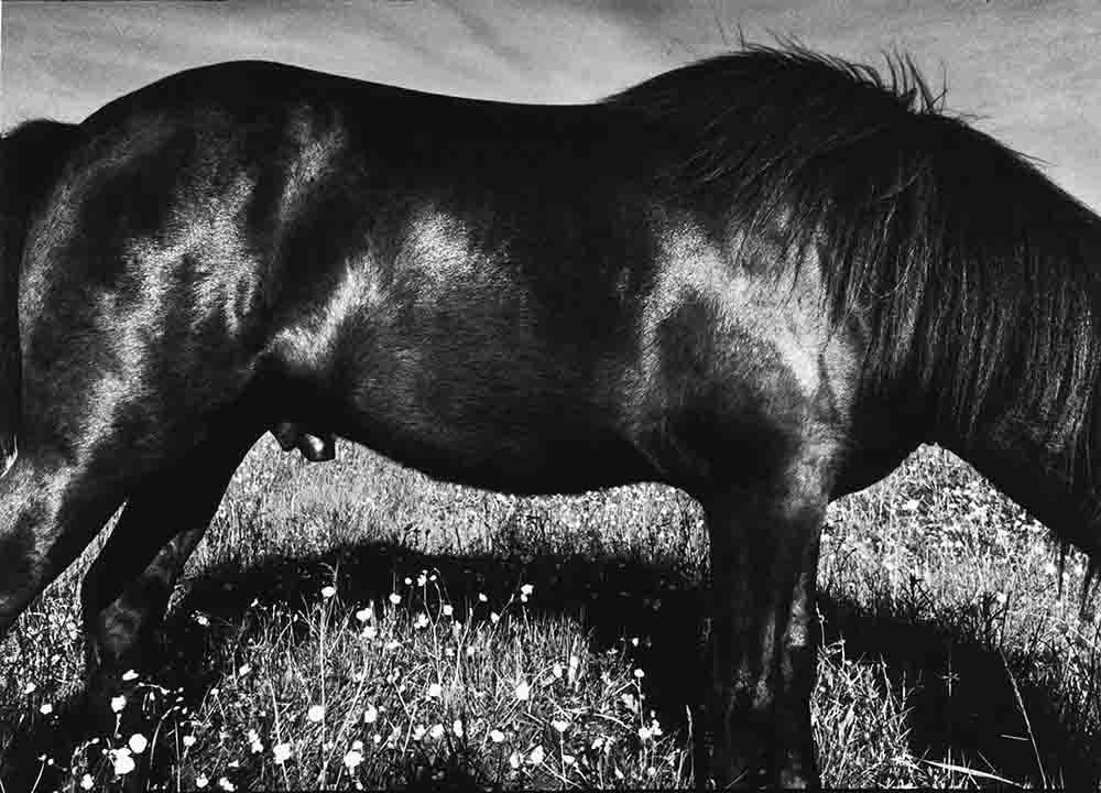Anders Petersen, Close Distance, 2002