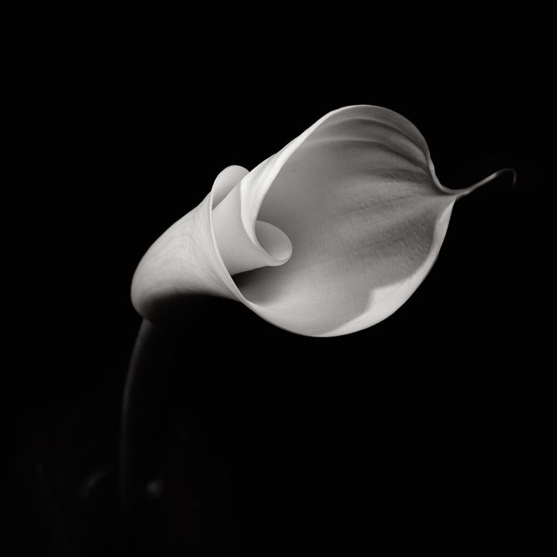robert-mapplethorpe_04.jpg