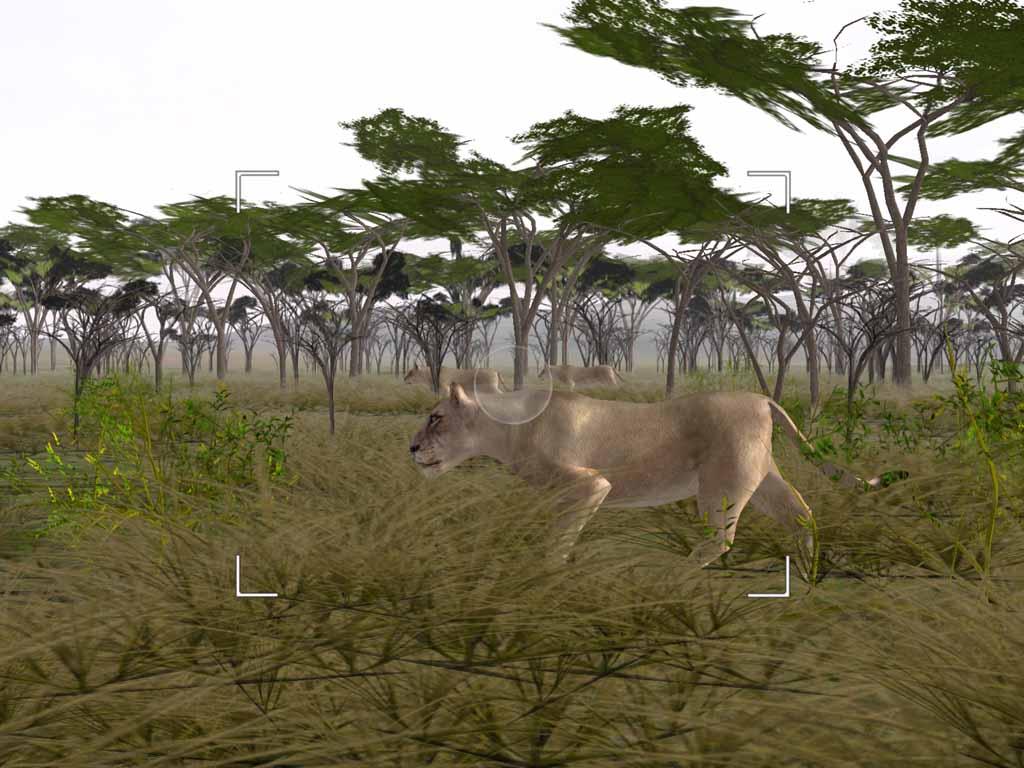 safari_02