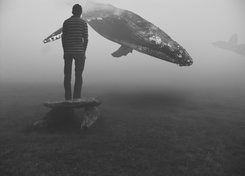 baleine-dans-le-ciel-01