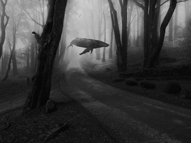 baleine-dans-le-ciel-02