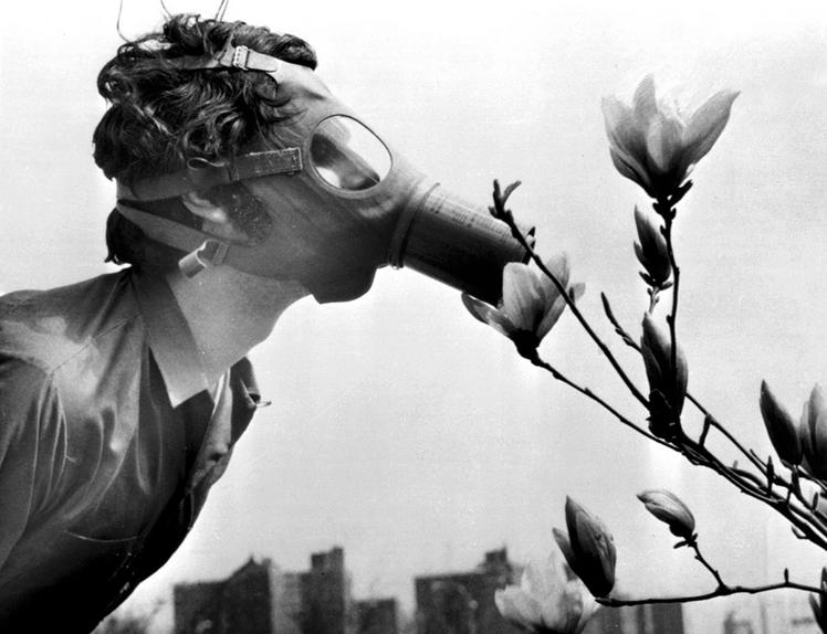 Un étudiant sent un magnolia à travers un masque à gaz, 1970, New York © AP